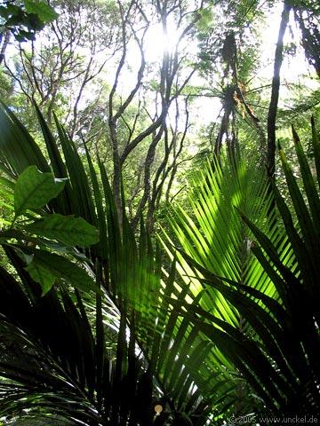 Dschungel, New Zealand - Aotearoa 2004/05
