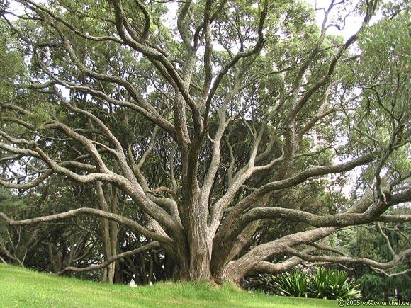 Albertpark Auckland, New Zealand - Aotearoa 2004/05