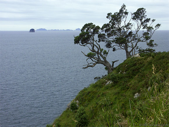 Nähe Hahei, New Zealand - Aotearoa 2004/05