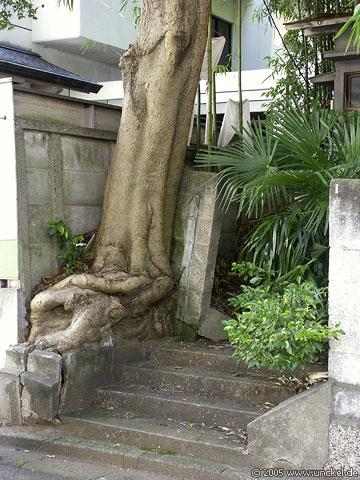 Nähe Shinjuku, Tokyo - 東京 2005